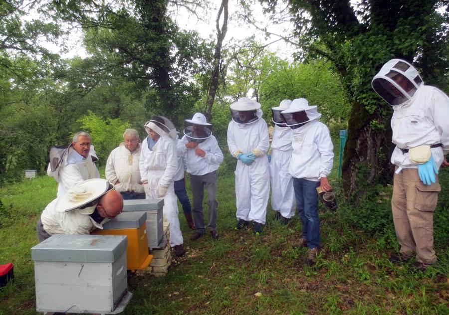 14-autour-des-ruches
