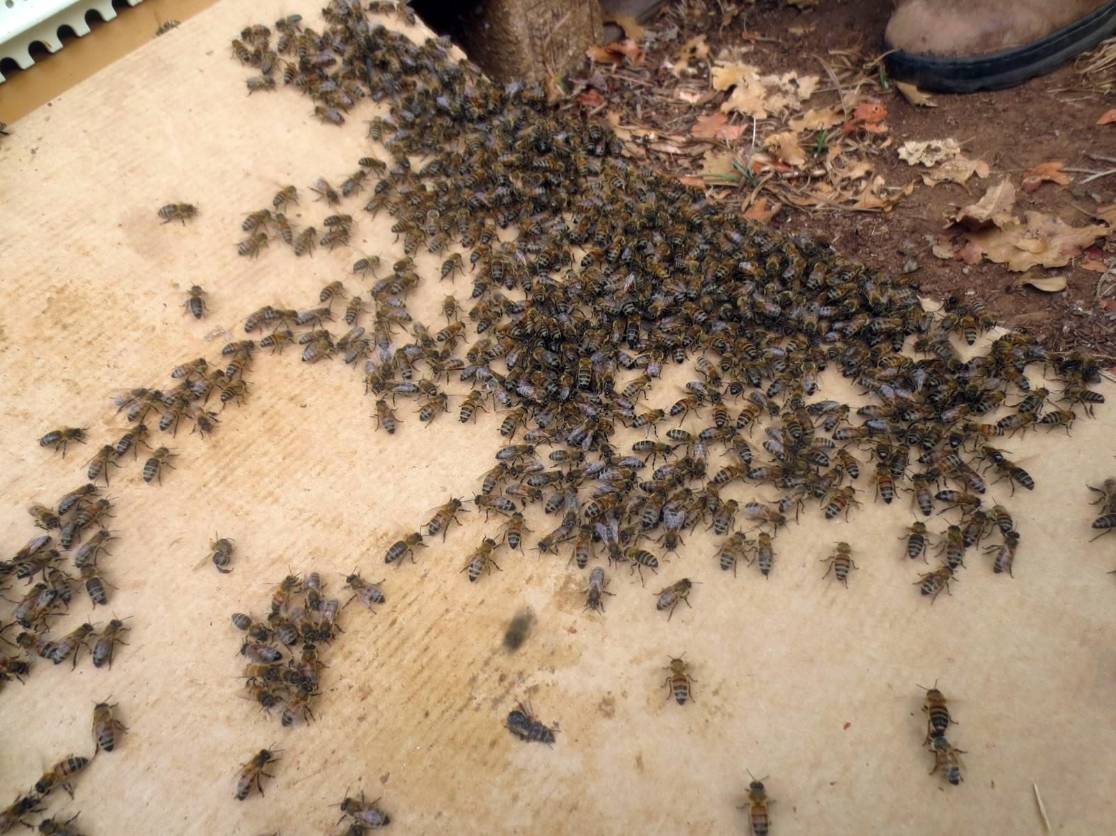 web-transfert-des-nucleis-en-ruche