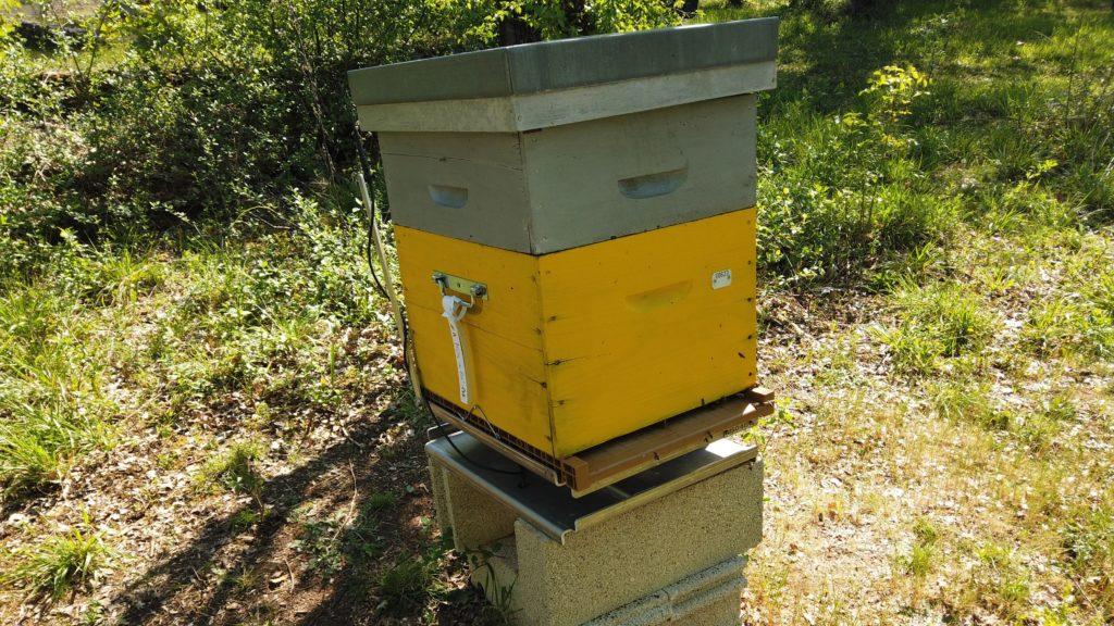 Optibee balance sous ruche