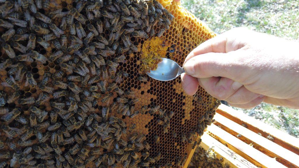 Pain d'abeilles