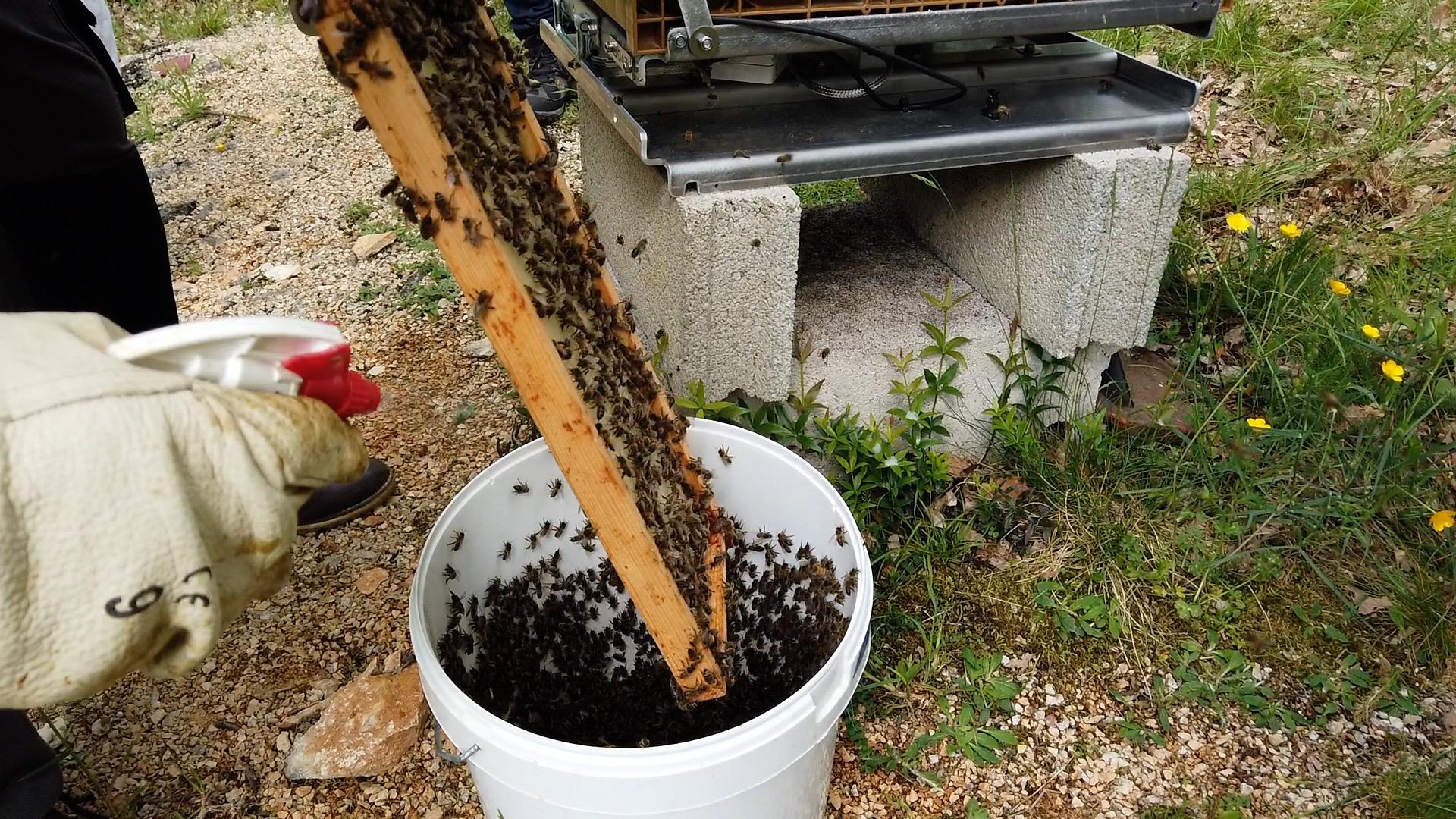 Collecte abeilles