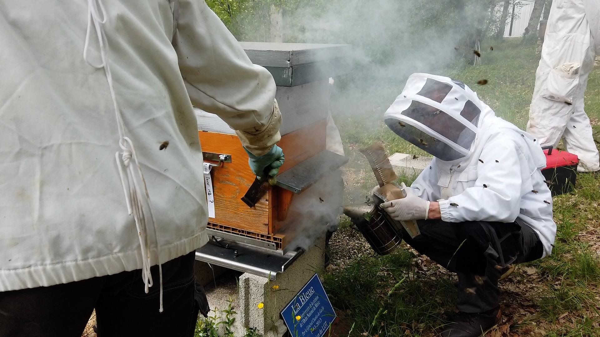 Paquet d'abeilles