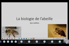 Visioconférence Karine biologie de l'abeille